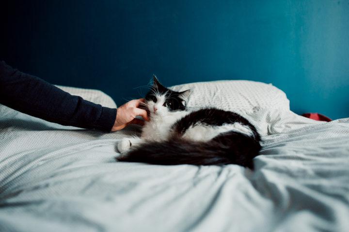 Chat de la famille sur le lit des parents